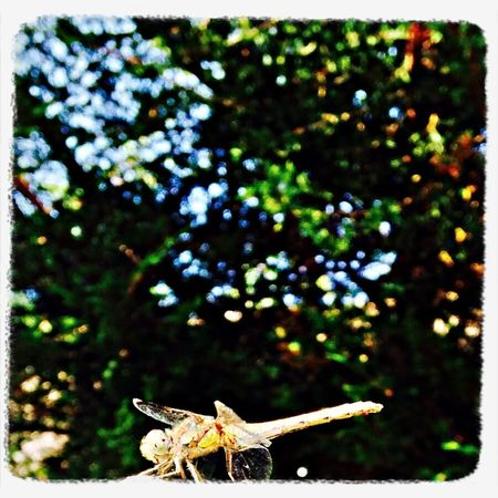 Dragon Fly Taking Photos Nature