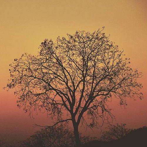 One of the nicest scenes I have experienced in my life. Driving around lake Kariba in Zimbabwe, August 2015. LakeKariba Lake Kariba Dam Zimbabwe Zim Africa Rhodesia Colors Photography Photo Photooftheday Fuji Fujifilm Xt10 Tree Treeoflife Fading Orange Sun