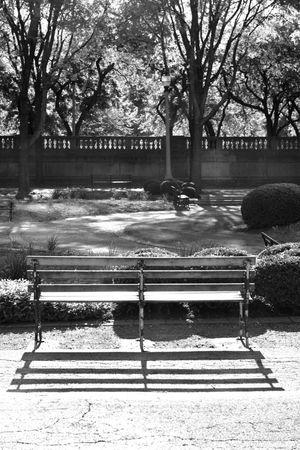 Bench in the Park Outdoors No People The Street Photographer - 2017 EyeEm Awards Blackandwhite Neighborhood Map EyeEmNewHere