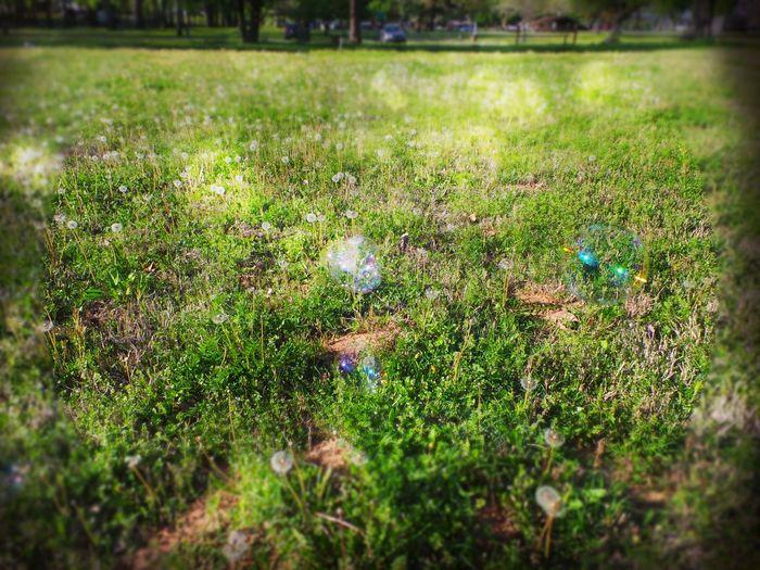 Bubbles And Dandelions Green Grass Summer Times  Rainbow Bubbles Field Meadow Park Dandelion Field Play