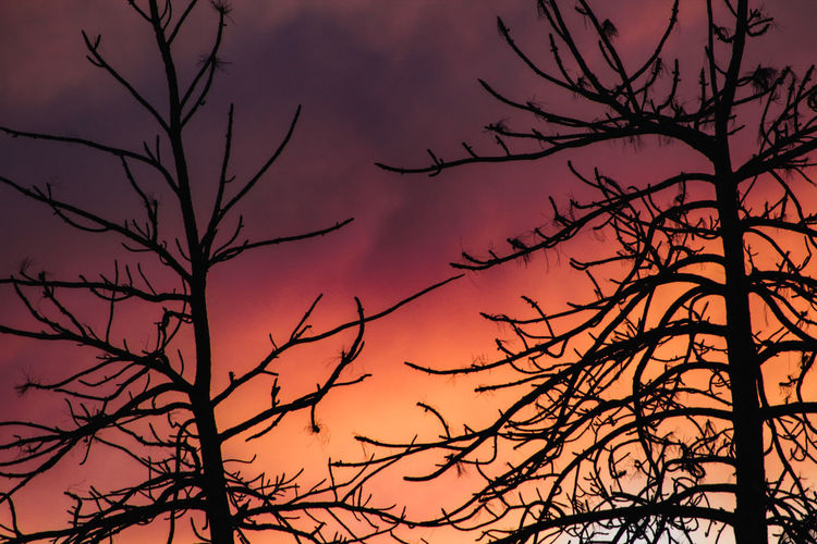 Low angle view of silhouette bare tree against sky during sunset
