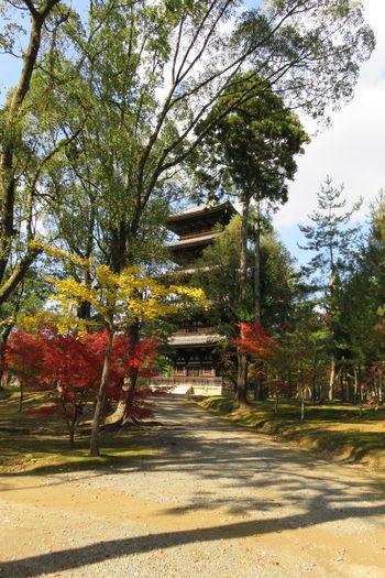 京都 仁和寺 日本 Kyoto, Japan 五重塔 Architecture Autumn Beauty In Nature Day Grass Luxury Nature No People Outdoors Scenics Sky Travel Destinations Tree City