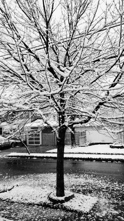 Snowy Tree Snow