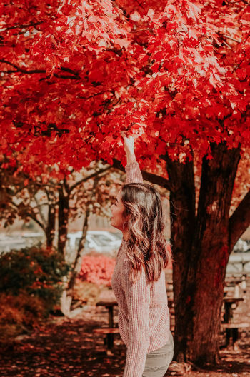 Tree Red Nature