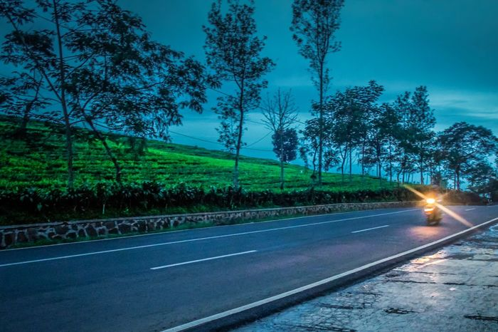 My Year My View just enjoy the ride Tree Road Transportation Sky The Way Forward Outdoors Nature Speed Night Power In Nature Landscape Tea Plantation  Beauty In Nature Ride A Bike  Motorcycles Journey INDONESIA EyeEm Indonesia Scenics Nature Cloud - Sky Leisure Activity Photo Shoot Lembang