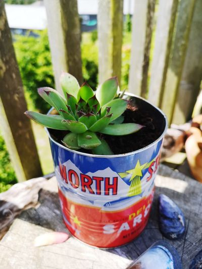 succulent craft