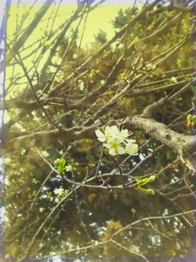 Whispers Of Spring