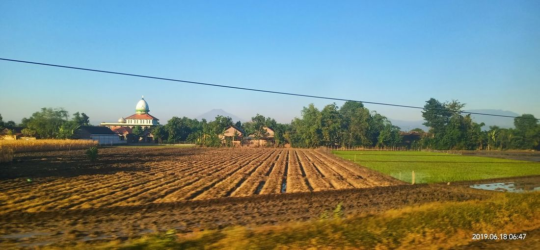 mosque at the rice field Tree Agriculture Sky Architecture Farmland Bale  Cultivated Land Combine Harvester Rice Paddy Agricultural Machinery