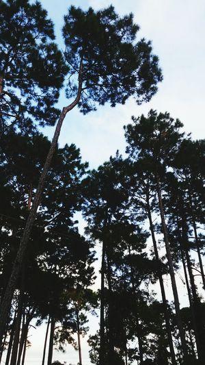 Nature 😍 Hello World Nature Photography Nature Newtothis First Eyeem Photo