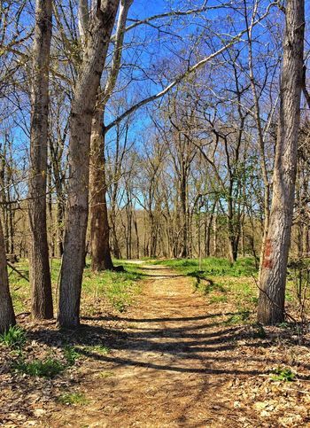 Wooded Path Forest Woods Trail Blue Sky Signs Of Spring Trees Peaceful Quiet Quiet Places The Great Outdoors - 2016 EyeEm Awards