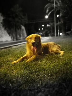 43 Golden Moments Goldenretriever Gold Retriever Golden Retriever Dog❤ Dog Love Dogs Of EyeEm Dogstagram Goldenretrieversofinstagram Goldenretrievers Goldenretrieverlove