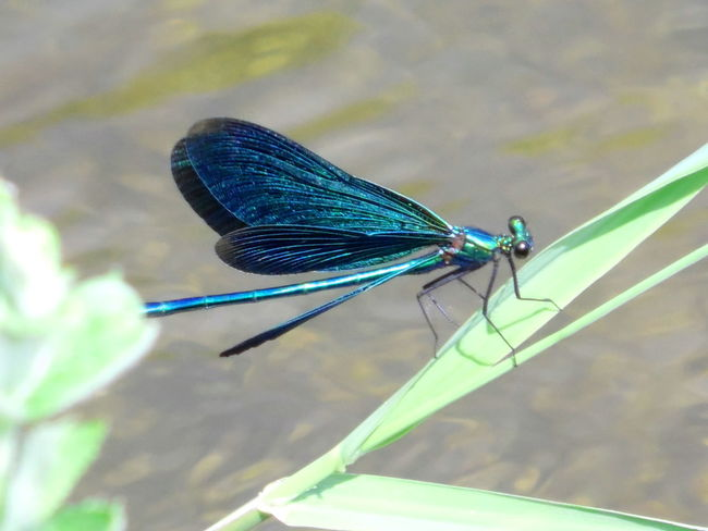 Dragonfly Nature Animal Themes Beauty In Nature Brookside Stream Bank Water Animals Animal Wing Fly Flapping