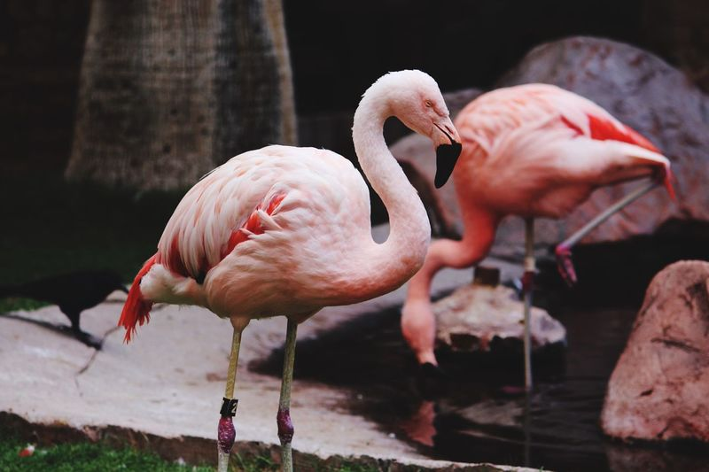 Close-up of flamingos water