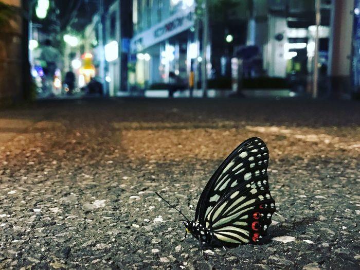 東京の裏道に蝶。色々な雰囲気を感じる一枚Tokyo Japan butterfly load First Eyeem Photo