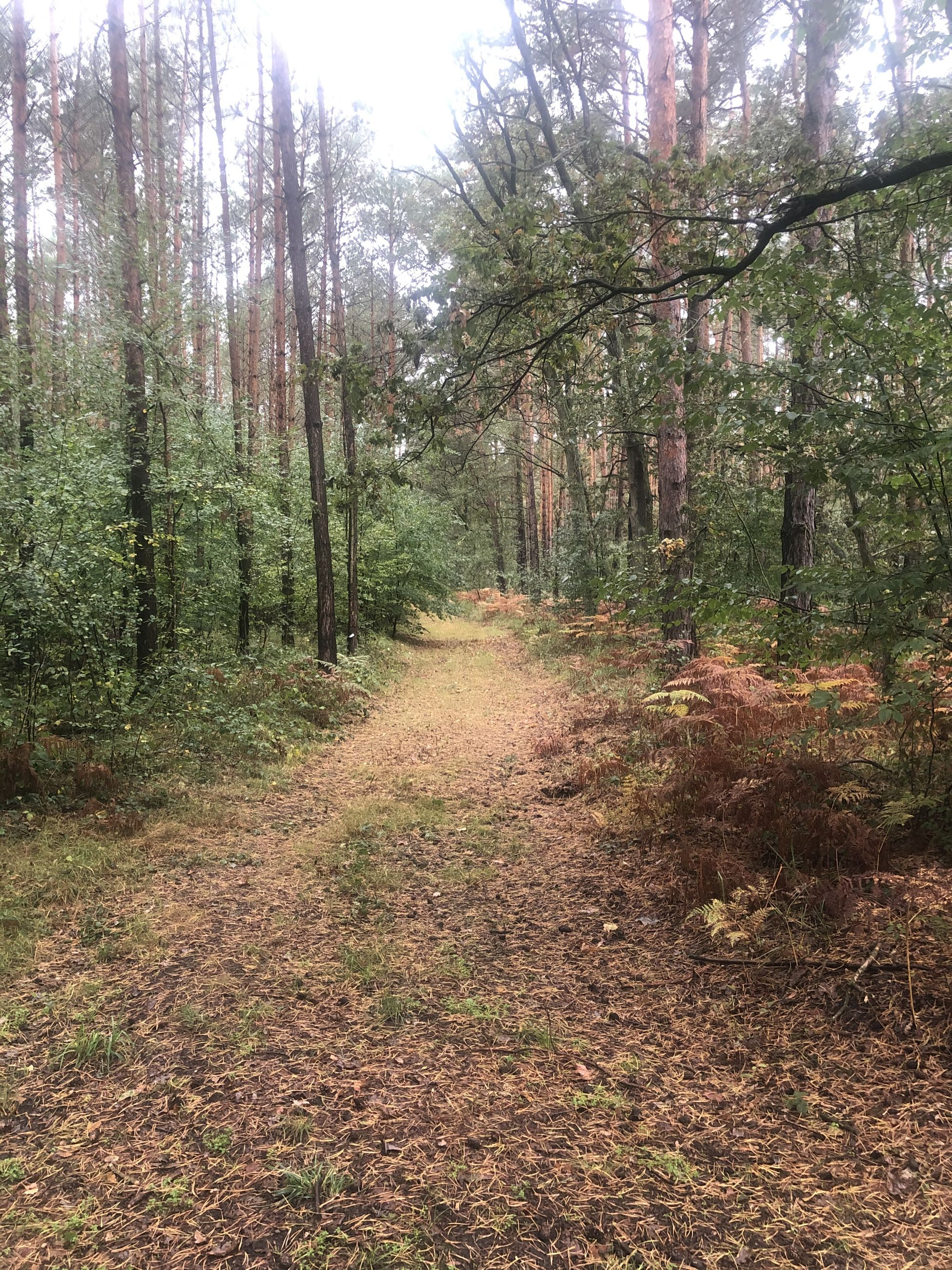 forest, land, tree, plant, direction, tranquility, the way forward, footpath, nature, woodland, no people, beauty in nature, growth, tranquil scene, day, non-urban scene, scenics - nature, landscape, environment, outdoors, trail