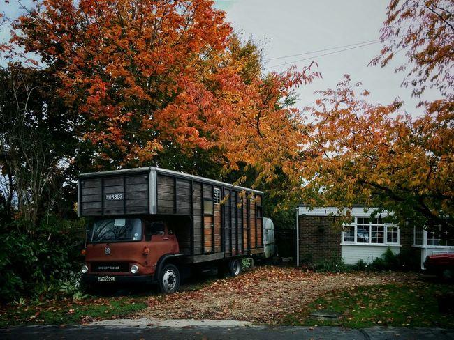 Hello World Autumn Colors Nexus 5 London Kent