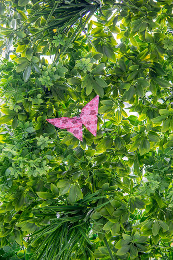 Close-up of pink leaves on tree