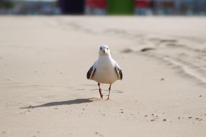 Seagull perching on a sand