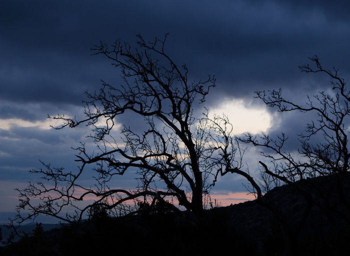 Tranquil scene silhouette Sky Tree Cloud - Sky Silhouette Tranquility Tranquil Scene Plant Beauty In Nature Scenics - Nature Bare Tree Nature No People Branch Low Angle View Dusk Non-urban Scene Outdoors Sunset Night