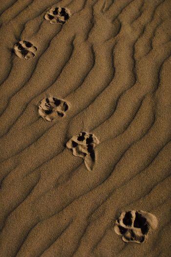 High angle view of paw print on sand