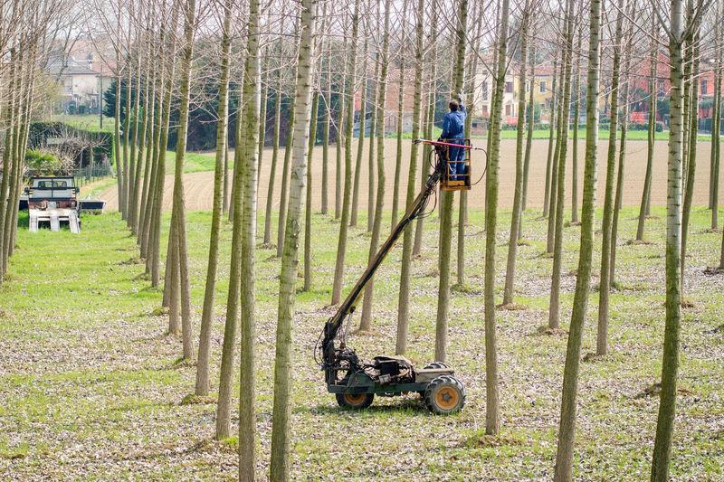 Man on cherry picker cutting bare trees