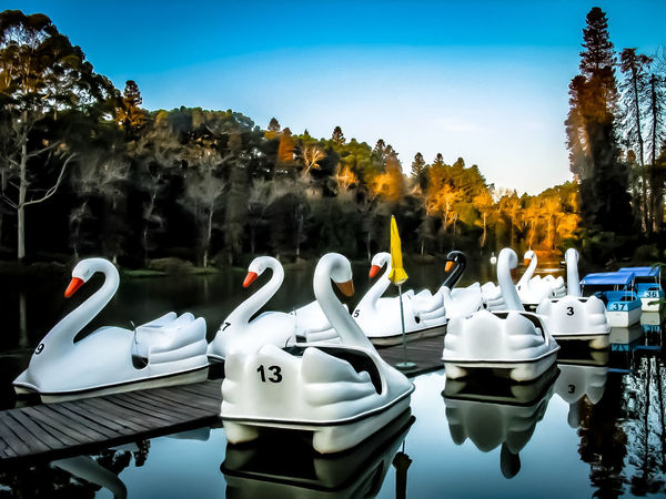 Gramado, Brazil Close-up Day Moored Nautical Vessel No People Outdoors Sky Swan Tree Water