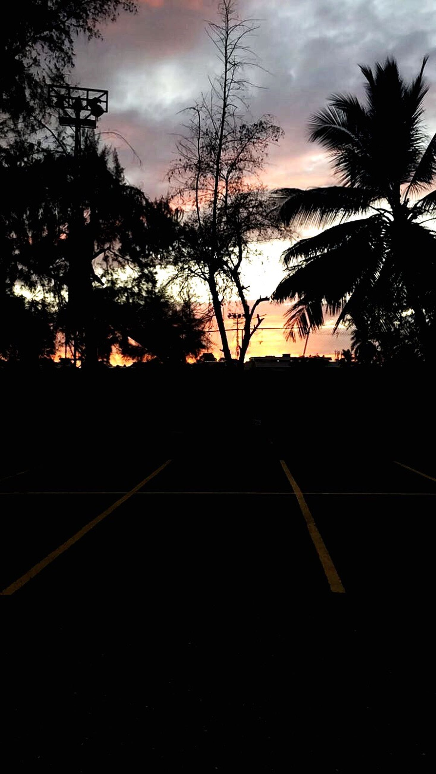 tree, silhouette, sunset, sky, nature, scenics, tranquility, beauty in nature, no people, outdoors, road, palm tree, day