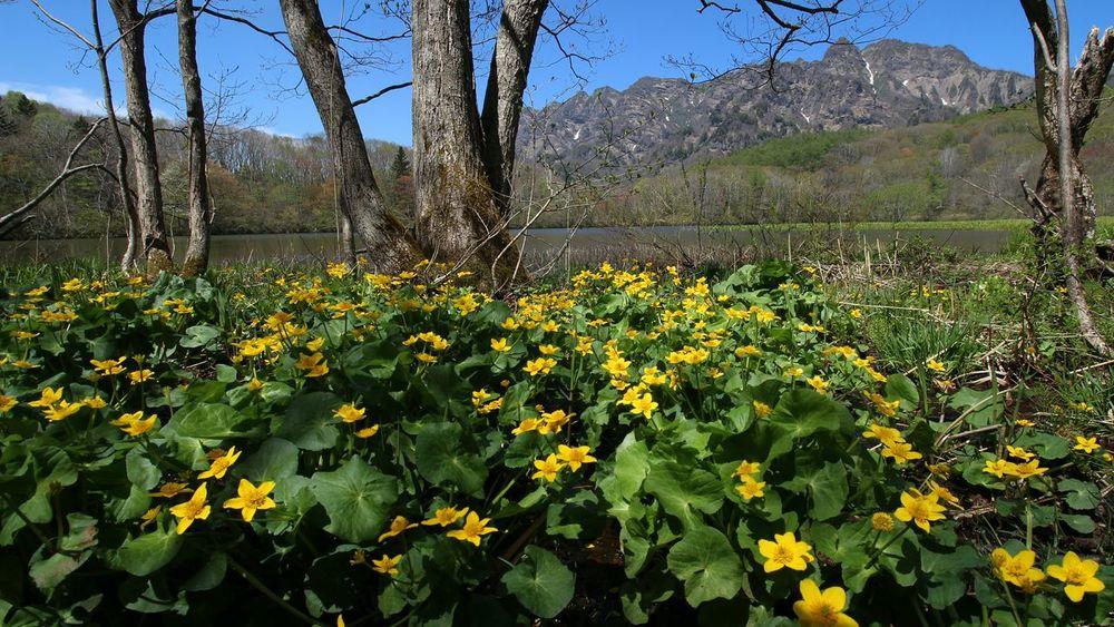 今週はこればっか💦💦戸隠の鏡池😅 Beauty In Nature EyeEm Nature Lover EyeEm Gallery Nature Photography From My Point Of View Nature EyeEm Flower おはよう~☀晴れたど🎵😆