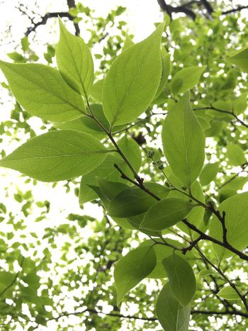 Green spring Season  Springtime Leaf First Eyeem Photo Showcase April IPhoneography