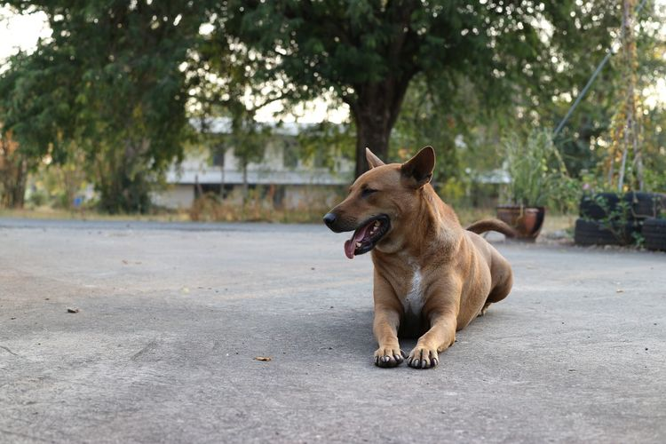 Dog standing on road in city
