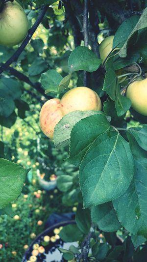 яблоко лето Солнышко витаминки First Eyeem Photo
