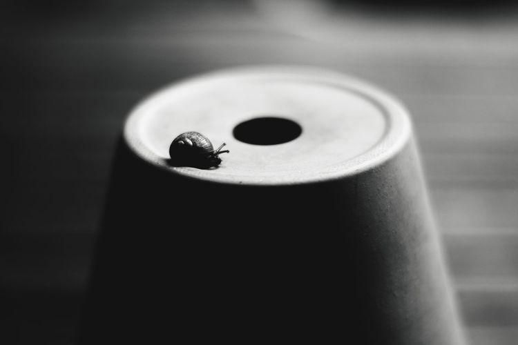Pitfalls - Snail on an upturned pot. No People Close-up Black And White Photography Blackandwhitephotography The Week On EyeEm Malephotographerofthemonth Beauty In The Mundane Focus On Foreground Beauty In Ordinary Things Snail Snail Closeup Black And White Collection  Snail On Table Black And White Friday #FREIHEITBERLIN The Still Life Photographer - 2018 EyeEm Awards