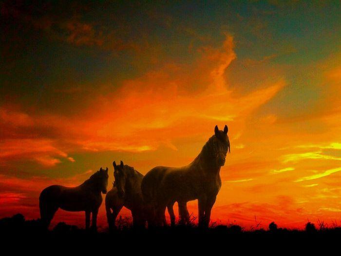 Horses standing on field against orange sky