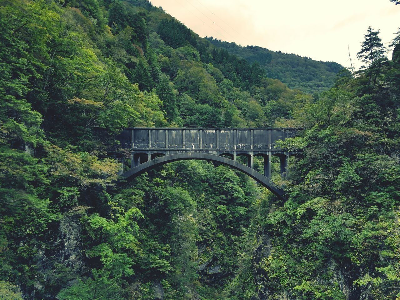 bridge - man made structure, tree, connection, built structure, transportation, green color, growth, architecture, nature, lush foliage, forest, rail transportation, no people, mountain, outdoors, day, plant, covered bridge, train - vehicle, scenics, beauty in nature, sky, steam train