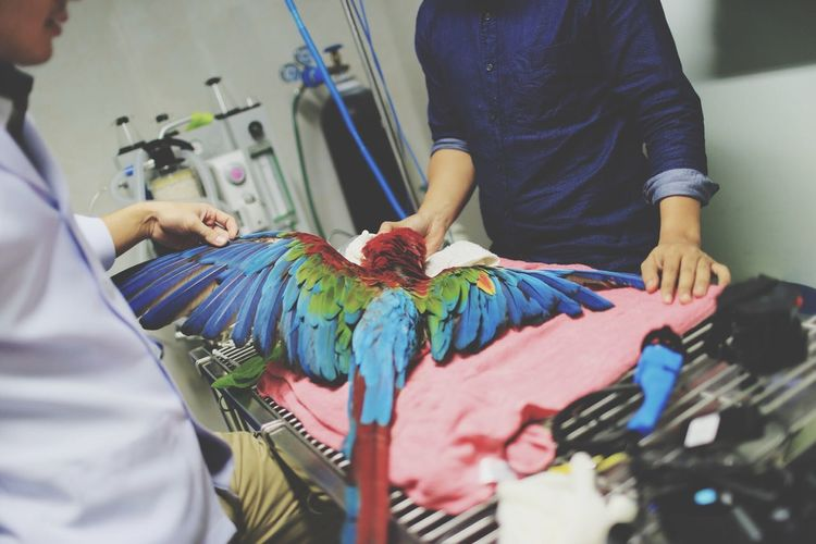 Veterinarians Examining Injured Bird On Table In Hospital