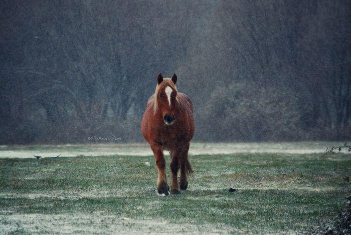 Melancholic Landscapes EyeEm Nature Lover Landscape #Nature #photography Horses Photo taken last winter in my village.