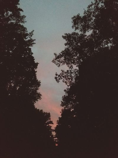 Georgia sunset through the woods Tree Sky Silhouette No People Low Angle View Night Tranquility Outdoors Nature Star - Space Moon Beauty In Nature Astronomy Close-up Pixelated First Eyeem Photo