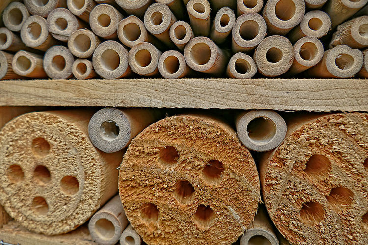 close-up of an insect hotel Arrangement Circles And Holes Circles Pattern Close Up Close-up Day Full Frame Insect Hotel Insects  Large Group Of Objects No People Wood Wood - Material