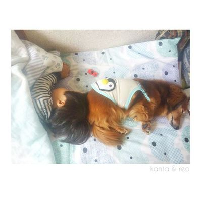 母から送られてきたpic * かんたがお昼寝に入ると必ず添い寝するレオ。 レオももうおじいちゃん犬なので、孫を見ている気分なのかな?笑 * いつ見ても可愛い2人……♥ 金太郎とのツーショットもいいけど、レオとのツーショットも◎ * では、ぼちぼち迎えに行ってきます♩゜ 1歳11ヶ月 23ヶ月 1歳 男の子 息子子供ig_kidskidsstagramkids_stagram ig_boys ig_oyabakabuloves_kids 犬いぬワンコミニチュアダックスフンドダックスafternoonnap