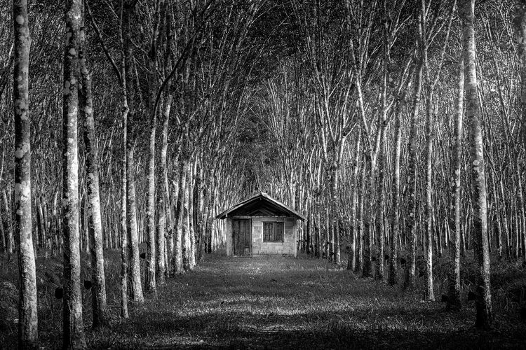 House amidst bare trees in forest