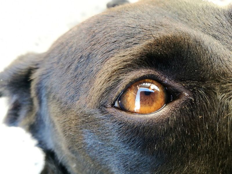 My son in my dog eye. Dog And Child Dog Eye Looking At Camera Dogs Dogs Of EyeEm Dog❤ Child Boy Pet Portraits Mix Yourself A Good Time Animal Photography Animal Animal Eye Pets Pets Of Eyeem Pet Photography  Dogphoto