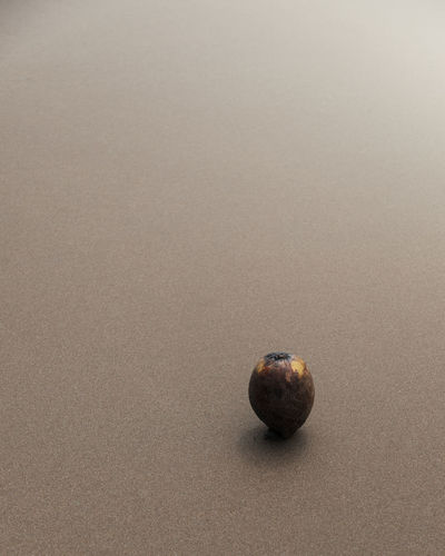 No People Single Object Close-up Still Life Land Healthy Eating Food And Drink Food Nature Beach Wellbeing Sand Copy Space Shell Animal Wildlife Fruit Day Studio Shot Indoors  Animal Marine Coconut Abstract StillLifePhotography Calm