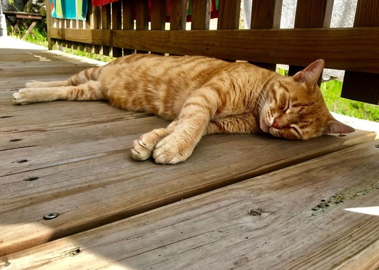 Sun Shadow Wood Cat Garfield Orange Tiger Sleeping Chilling Domestic Cat Relaxing Silence Vacation