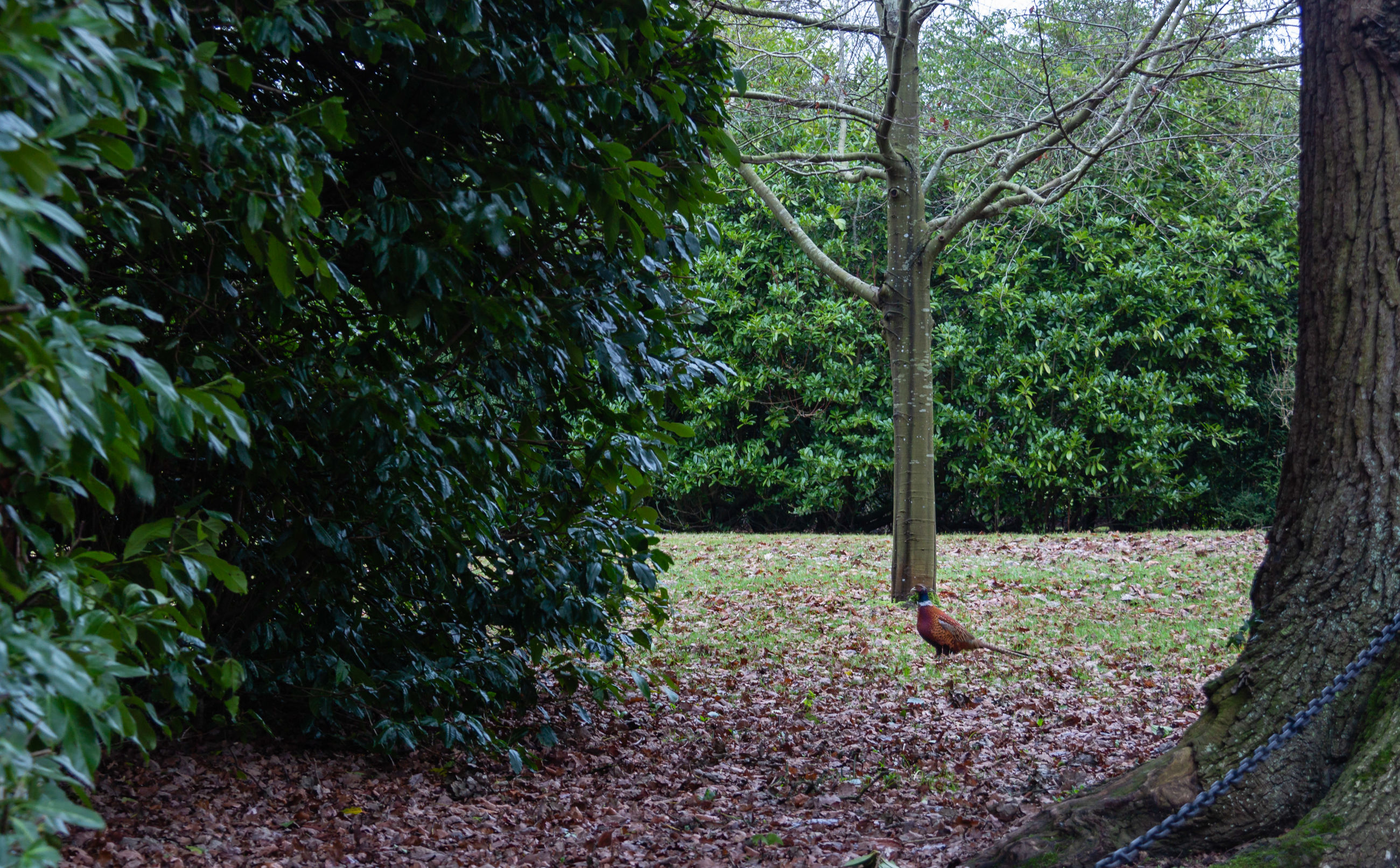 plant, tree, growth, nature, tranquility, green color, land, no people, beauty in nature, forest, trunk, tree trunk, day, scenics - nature, plant part, leaf, landscape, tranquil scene, foliage, outdoors, woodland, flowerbed, gardening, ornamental garden