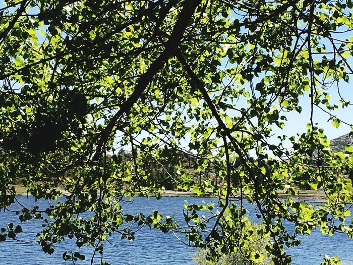 Tree Growth Branch Nature Leaf Outdoors Beauty In Nature Water Day Lake Green Color Plant Scenics Tranquil Scene Tranquility No People Sky Flower Clear Sky Leaves Foliage