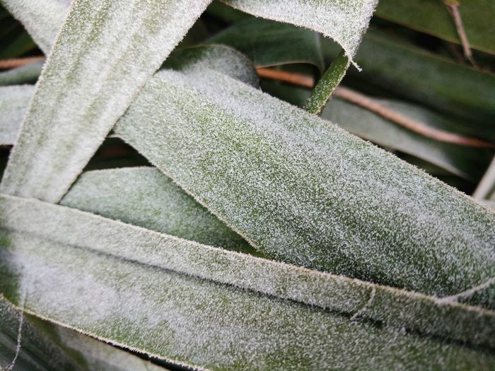 Leaf Frost Backgrounds Full Frame Close-up Ice Crystal Plant Life Weather Condition