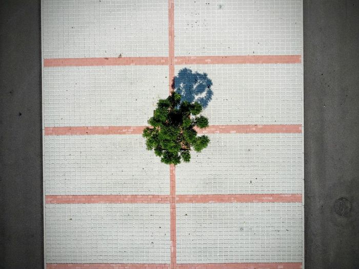 Directly above shot of potted plants on wall
