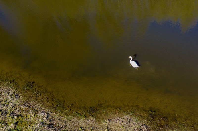 impressions from rural area, first spring days Day Nature Outdoors Dronephotography Aerial View Green Color Water Animal Wildlife Animal No People High Angle View Lake