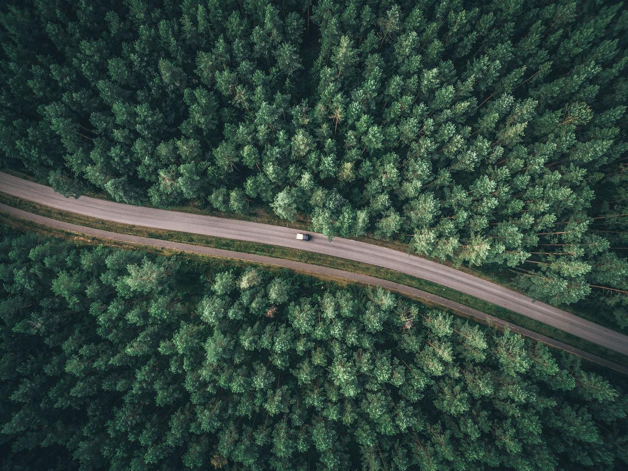 transportation, plant, mode of transportation, tree, rail transportation