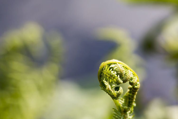 Close-up of growing fern